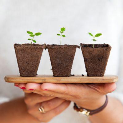 mani di donna che tengono un vassoio con 3 piante - foto in CC tatianaberlaffa.com