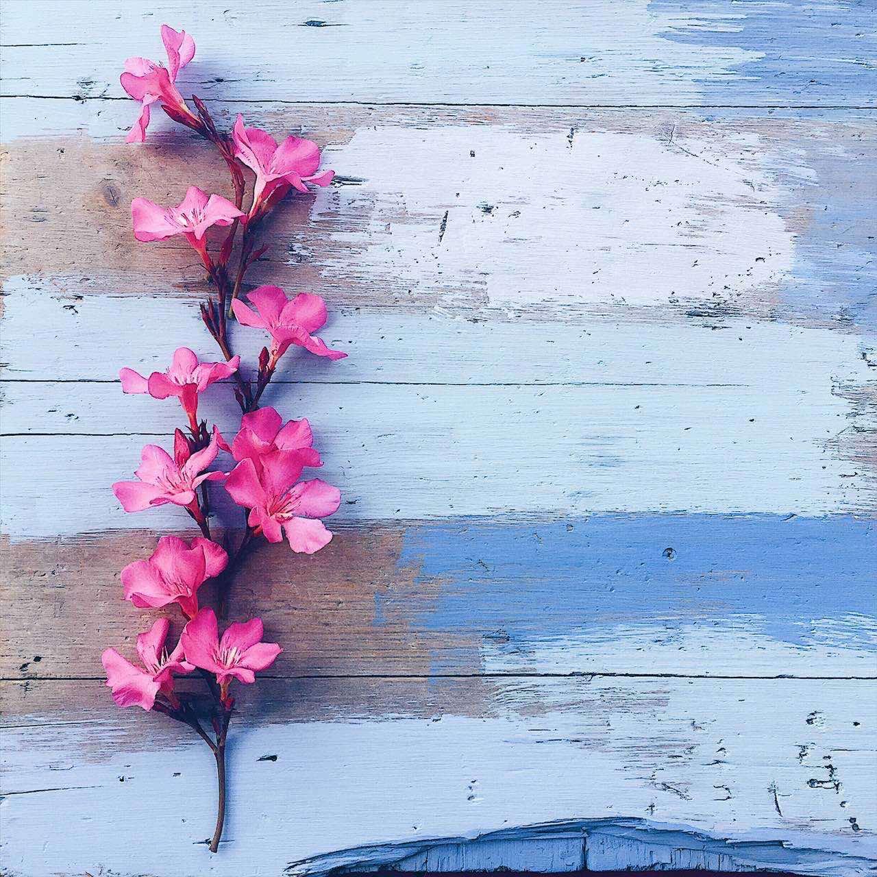 Pink Flowers - foto di tatianaberlaffa.com