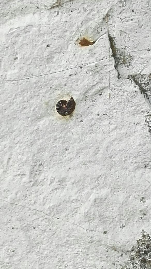 Monastero San Pietro: fossile - foto di tatianaberlaffa.com