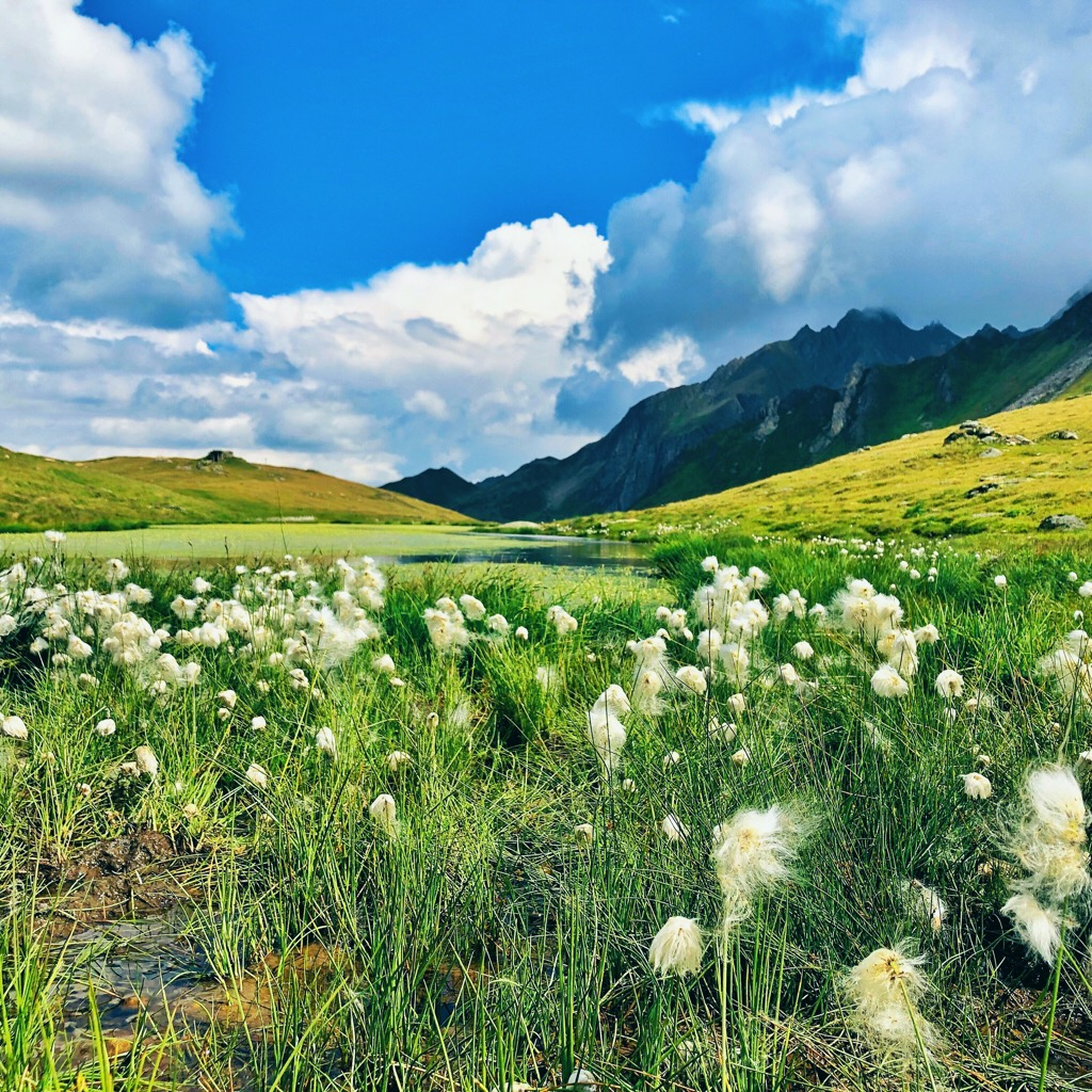 Prato di montagna sotto un cielo estivo azzurro con poche nuvole - tatianaberlaffa.com