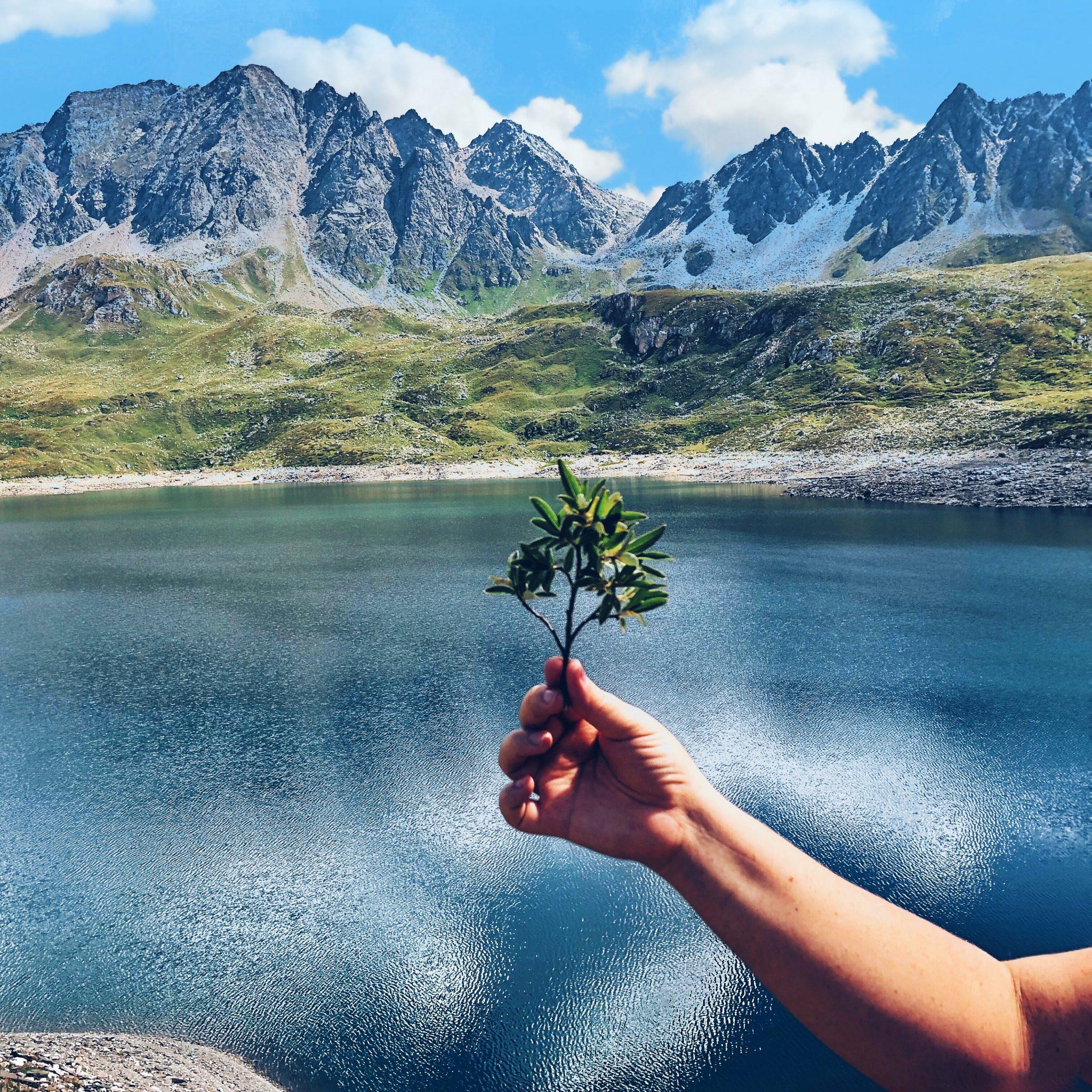 Mano che tiene un rametto con foglie verdi con paesaggio estivo di montagne sullo sfondo - foto di tatianaberlaffa.com