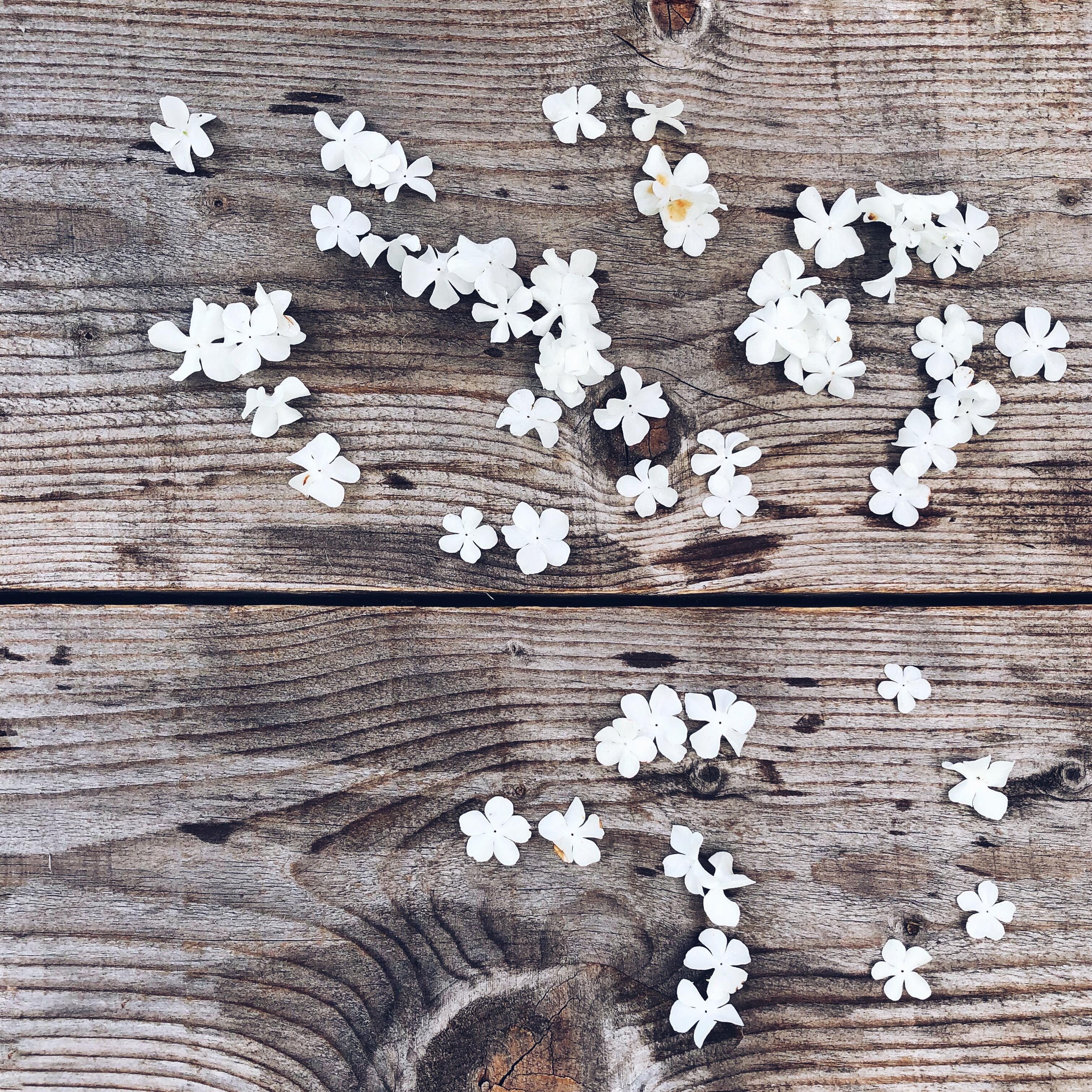 Petali di Ortensia su assi di legno - Percorsi di Mindfulness e Crescita Personale - tatianaberlaffa.com